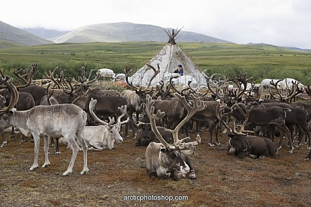 Polar Urals with Khanty camp and reindeer