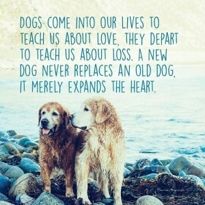 """Dogs come into our lives to teach us about love. They depart to teach us about loss. A new dog never replaces an old dog, it merely expands the heart."""