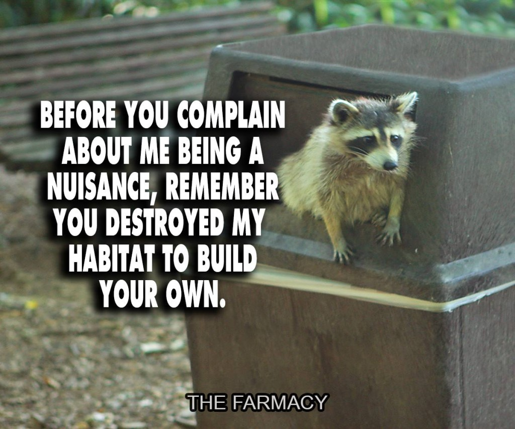 """Before you complain about me being a nuisance, remember you destroyed my habitat to build your own."""