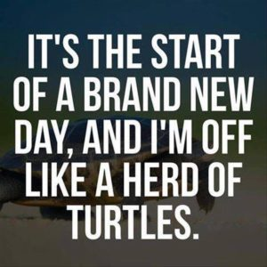 It's the start of a brand new day, and I'm off like a herd of turtles.